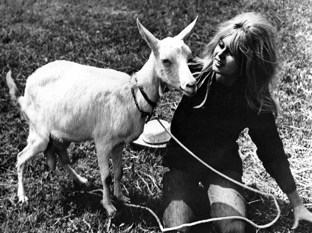 brigitte bardot sexpot with pet goat