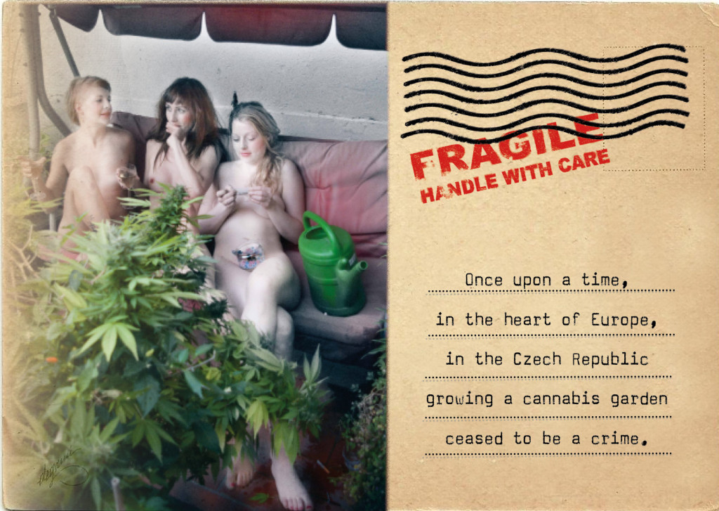 3 beautiful czech women on a faded couch with a huge cannabis plant